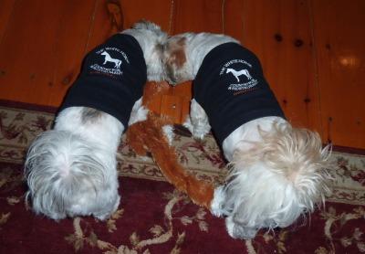 Doggie Tee Shirts p1000950.jpg